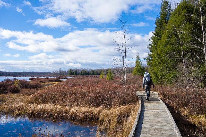 Kelly on the Bog Trail