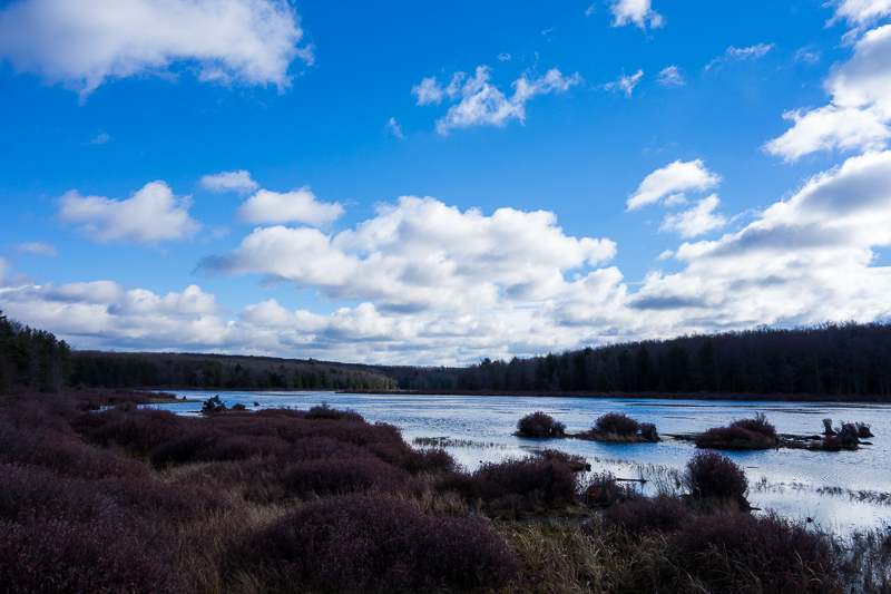 Black Moshannon Lake from the Bog Trail