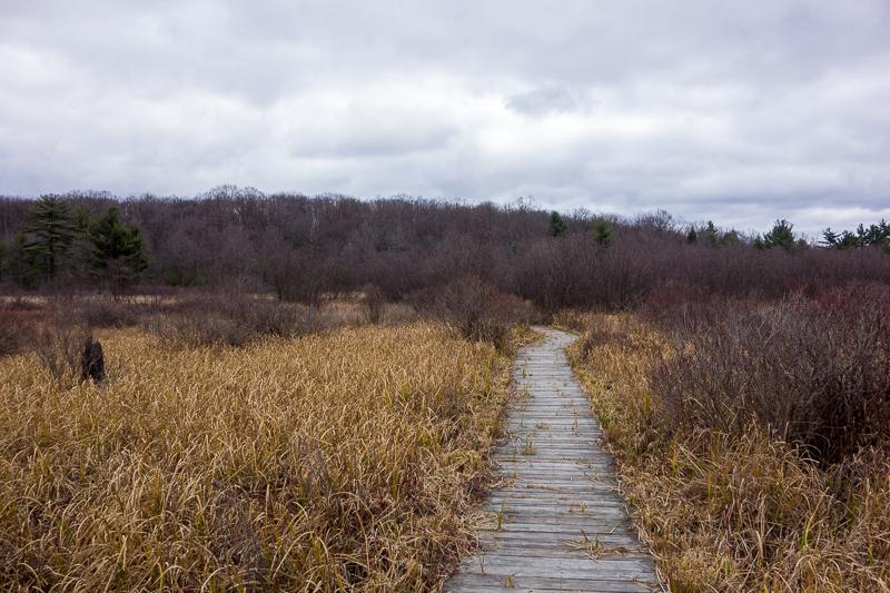 More boardwalk through a marsh