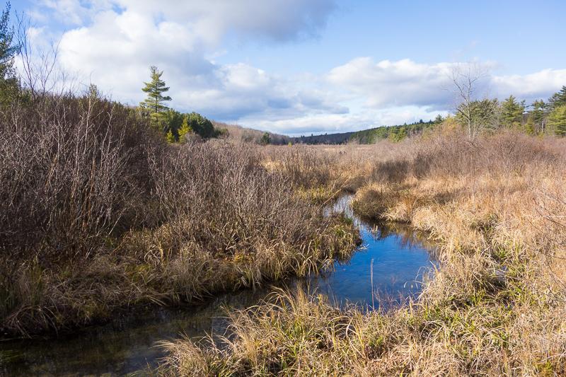 More bog