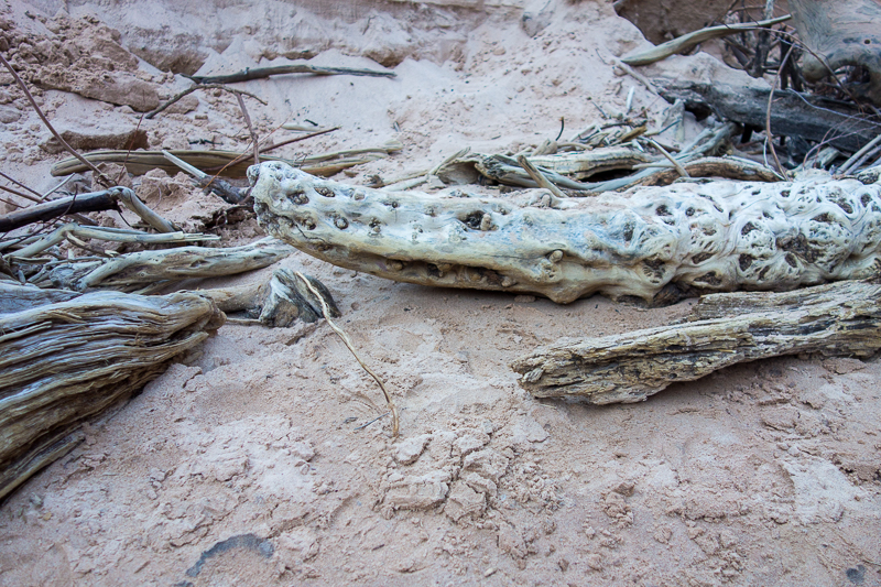 Alligator driftwood