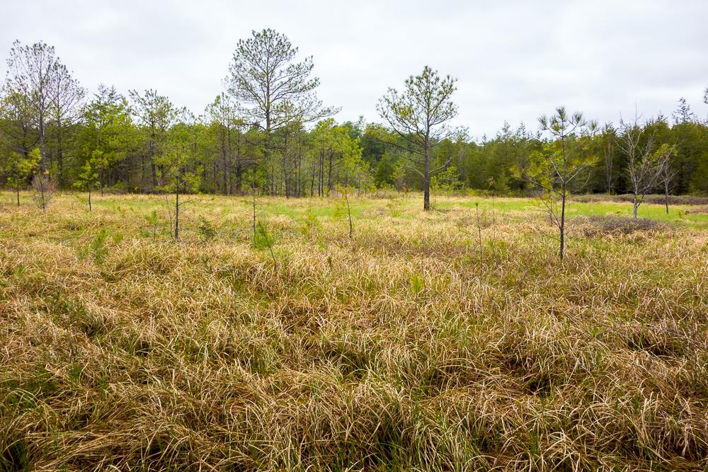 Rare grasses