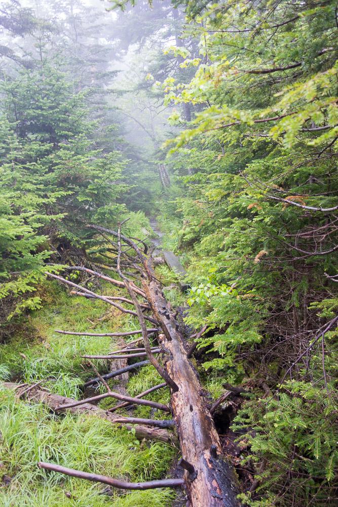 Long Trail hike